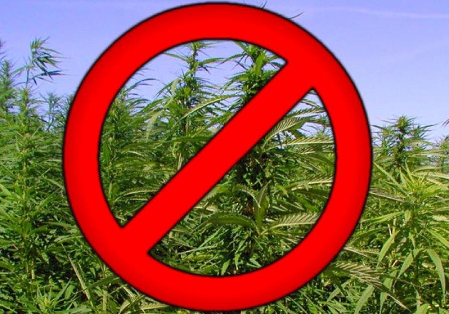 Принятые меры по уничтожению дикорастущей конопли как упаковывать марихуану